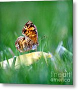 Pearl Crescent Butterfly Square Grass Metal Print