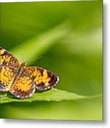 Pearl Crescent Notecard Metal Print