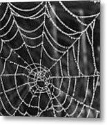 Pearl Web Metal Print