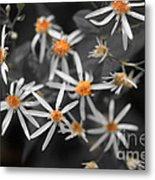 Pedals And Pollen Metal Print