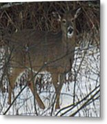 Peek A Boo Deer Metal Print