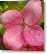 Peek A Boo Dogwood Metal Print