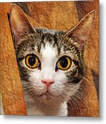 Peek A Boo I See You Metal Print