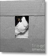 Peek A Boo Kitty Metal Print