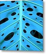 Peek-a-boo Leaf Metal Print