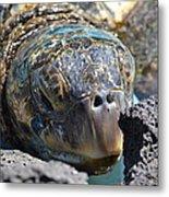 Peek-a-boo Turtle Metal Print