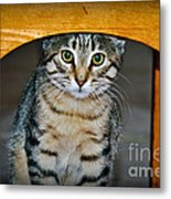 Peekaboo Kitty Metal Print