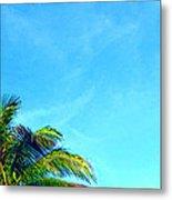 Peekaboo Palm - Tropical Art By Sharon Cummings Metal Print