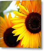 Peekaboo Sunflowers Metal Print