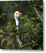 Peeking Cattle Egret Metal Print