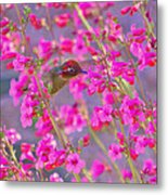 Peeking Through The Pink Penstemons Metal Print