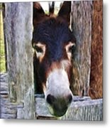 Peeking Thru The Fence Metal Print