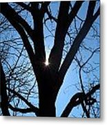 Peeping Through The Trees Metal Print