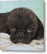 Buddy The Pekingese Metal Print