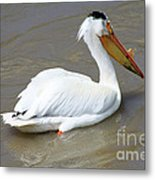Pelecanus Eerythrorhynchos Metal Print