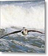 Pelican 4057 Metal Print