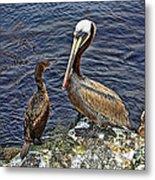 Pelican And American Black Duck Metal Print