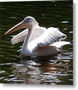 Pelican And Friend Metal Print