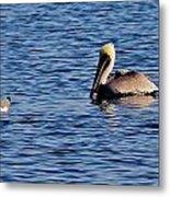 Pelican And Gull Metal Print