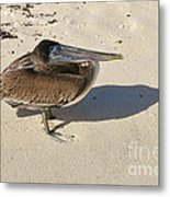 Pelican And His Shadow Metal Print