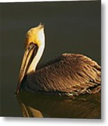 Pelican At Dark Metal Print
