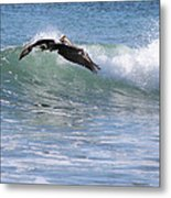 Pelican At Playa Grande Metal Print