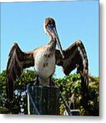 Pelican At Rest Metal Print