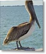 Pelican At The Gulf Metal Print