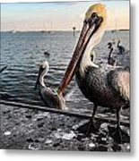 Pelican At The Pier Metal Print