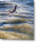 Pelican Briefly Metal Print
