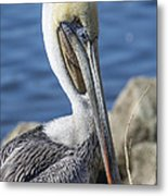 Pelican By The River Metal Print