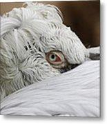 Pelican Eye Metal Print