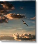 Pelican Flight Metal Print