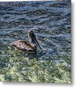 Pelican Floater Metal Print