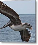 Pelican Fly By Metal Print