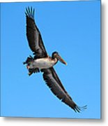 Pelican Flying High Metal Print