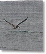 pelican Flying Low Metal Print