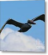 Pelican In Flight I Metal Print