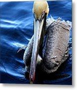 Pelican In The Bay Metal Print