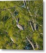 Pelican In The Trees Metal Print