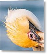 Pelican Looking Upside Down Metal Print