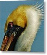 Pelican Mohawk 1/13 Metal Print