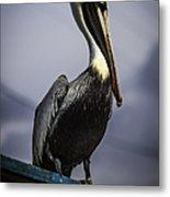 Pelican On Dock Metal Print