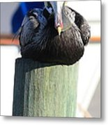 Pelican On Piling Metal Print