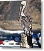 Pelican On Post Metal Print