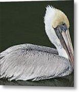 Pelican On The Intercostal Metal Print
