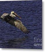 Pelican Over Water Metal Print