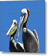 Pelican Pair At Oceanside Pier Metal Print