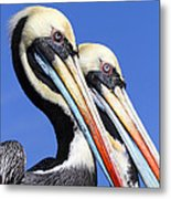 Pelican Perfection Metal Print by James Brunker