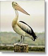 Pelican Poise Metal Print
